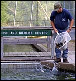 Nh trout stocking report fishing new hampshire fish for Fish and game stocking report