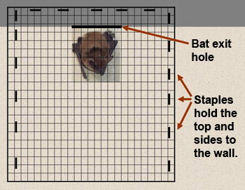 Homeowners And Bats Wildlife New Hampshire Fish And