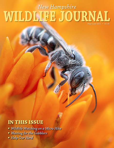 NH Wildlife Journal magazine